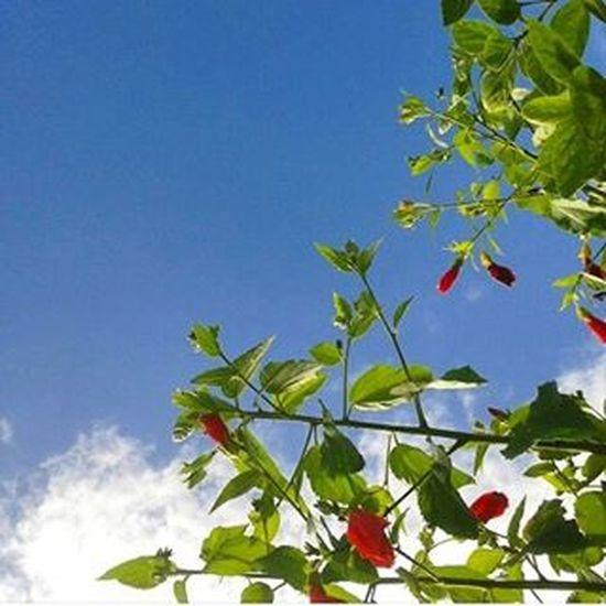 Portobelo Visiteportobelo Dialindo Flowers Naturelovers Amosc Amorpelanatureza Lovephotography