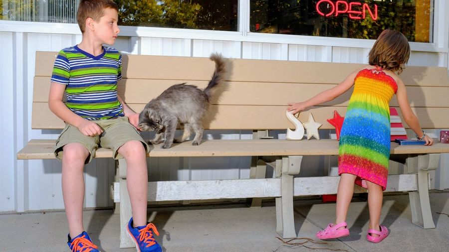 Boy Petting Cat By Sister Playing On Bench