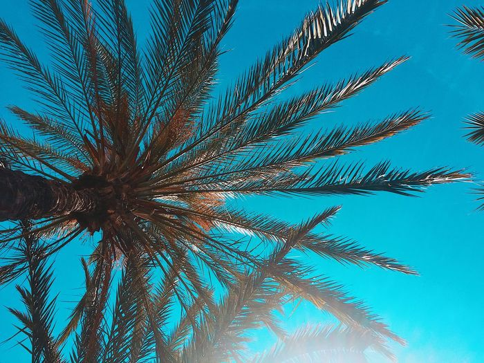 Palms Palm Tree