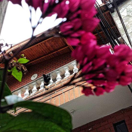 😍! Kyra Flowers Home Envigado ThecolorsofGod