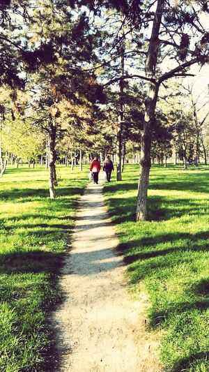 Nature Grass Green🌿 Tree Peaceful Moment Lovely Day :) Beautiful Weather♡ Beauty In Nature Peace Good Times Park Nature Lover🌳🍃🍂🌿 Walking Day Real People Shadow Outdoors