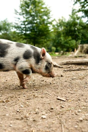 Bavaria Animal
