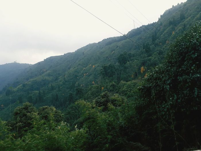 Scenic view of forest against sky