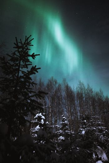 Moonlight vs. Northern Lights Tree Night Beauty In Nature Sky Nature Green Color Tranquility Winter Cold Temperature No People Tranquil Scene Snow Low Angle View Star - Space Forest Outdoors Astronomy Aurora Borealis Northern Lights Lapland, Finland Landscape Freshness Scenics Nature_collection Check This Out