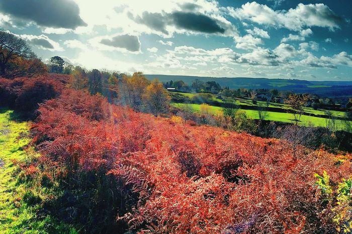 Bracken Fields Hdr Edit Walking Around Taking Pictures in The Peak District Derbyshire Uk