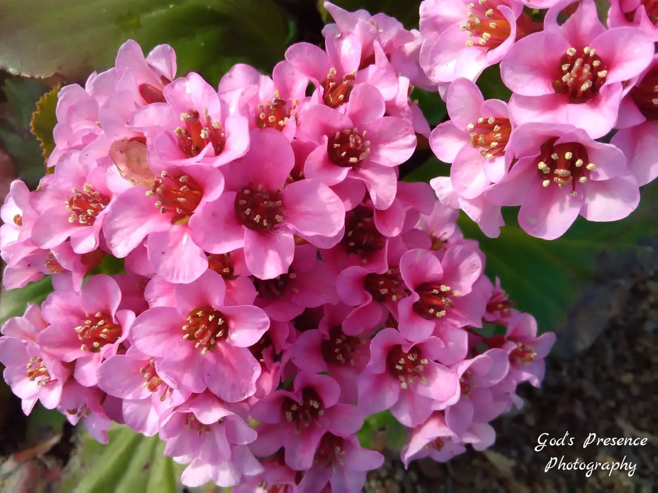 flower, nature, beauty in nature, petal, fragility, growth, plant, outdoors, no people, pink color, freshness, close-up, day, flower head