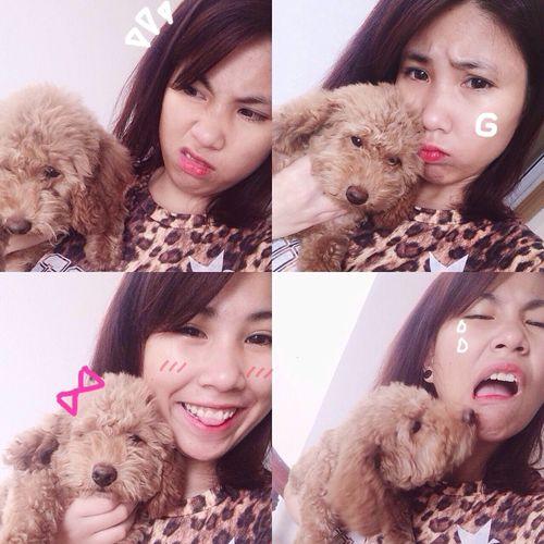 Pet Photography  My Pet Mochi Vietnam Photooftheday Myhome Selfie Playtime Lovedogs My Toypoodle