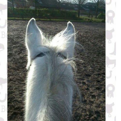 http://www.bitmagazine.nl/inzending/oortjes-van-mijn-paard-schimmie/ zou je op mij willen stemmen Bit  Fotowedstrijd Schimmie