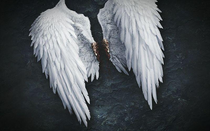 skrzydła? Każdy Z Nas Je Ma Musimy Je Tylko Zobaczyć Wings Dreams