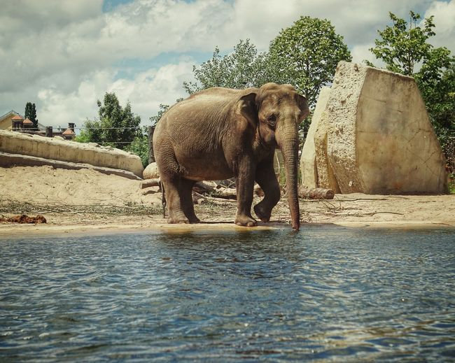 Zoo 2019 Niklas Storm Juli Water Tree Elephant Animal Trunk Washing Spraying Sky African Elephant Animals In Captivity Captivity My Best Photo