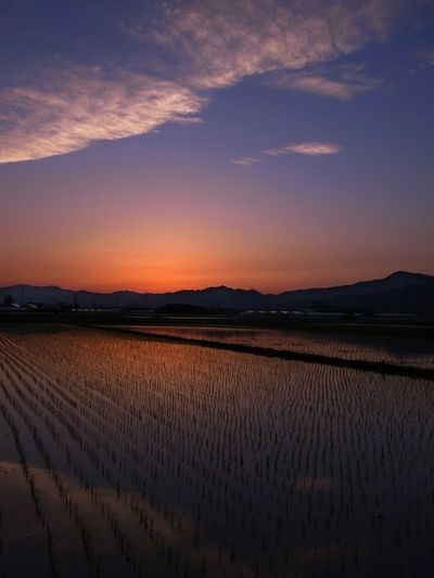 Sunset Rice Field 徳島県