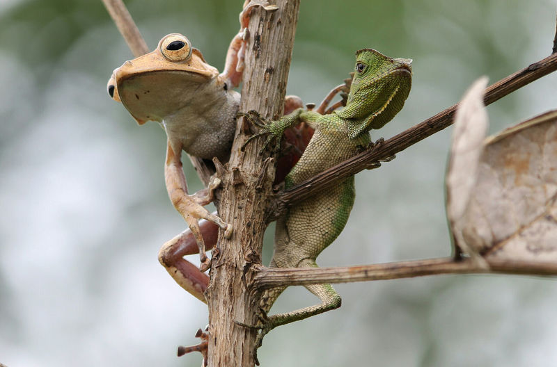 friends Animal