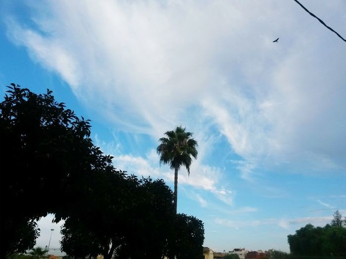 EyeEmNewHere sky Cloud - Sky Nature Day Outdoors Tree Palm Tree Bird Blue Beauty In Nature No People One Animal Nature Daytime Photography Meknès City