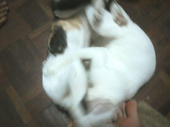 CAT WAR Cat♡ FUNNY ANIMALS War My Pets Enjoying Life EyeEm Animal Lover In Chiangmai Thailand