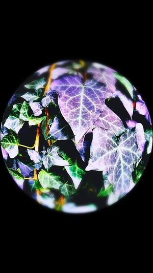 Earhexposed Black Background No People Close-up Planet Earth Illuminated Cape Town, South Africa Somerset West Beauty In Nature SeeTheWorldThroughMyEyes Love To Take Photos ❤ Outdoors Purple Color