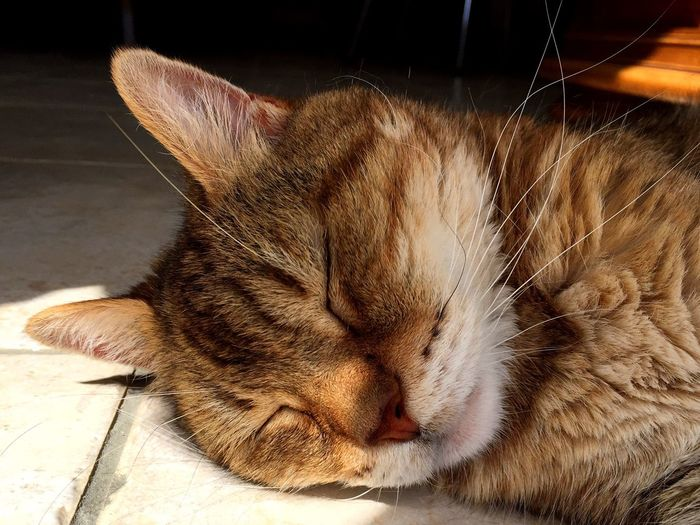 Cat Chat Chatte Roux Gros Plan Close-up Pets Cat♡ Sommeil Chat Roux Ginger Cat