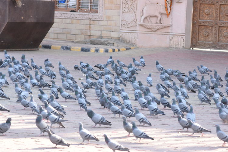Pigeons perching in a building