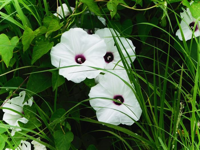 White Color Plant Nature Flower Beauty In Nature No People Close-up Outdoors Outinthecountry Enjoying Life Kansas