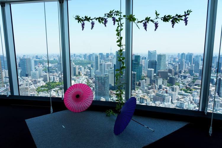 Purple flowers on glass window against building