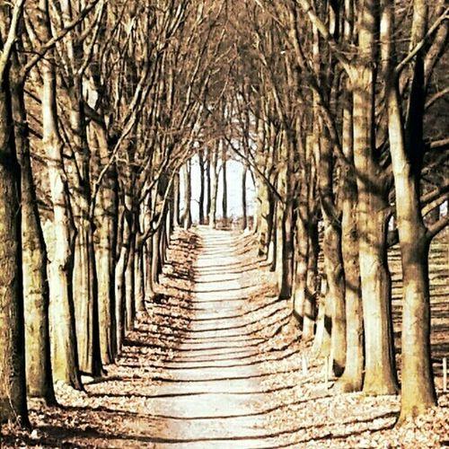 EyeEm Best Shots - Trees EyeEm Nature Lover Love Me Some Trees Mood Captures