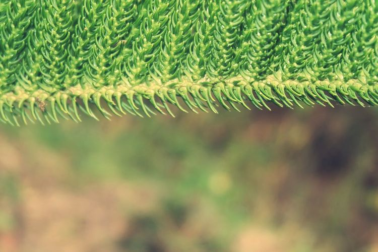 Backgrounds Full Frame Close-up Green Color Plant Sky Blade Of Grass Lush - Description Agricultural Field Cultivated Land Plant Life Damselfly Dew RainDrop Lush Foliage Crop  Rice Paddy Ear Of Wheat Oilseed Rape Frond Farm Mustard Plant Palm Leaf Growing Plant Part Plowed Field Farmland Plantation Drop