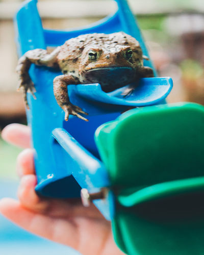 Childhood Close-up Close—up Full Frame Outdoors Plant Riding Toad Toadstool Toasted Bread