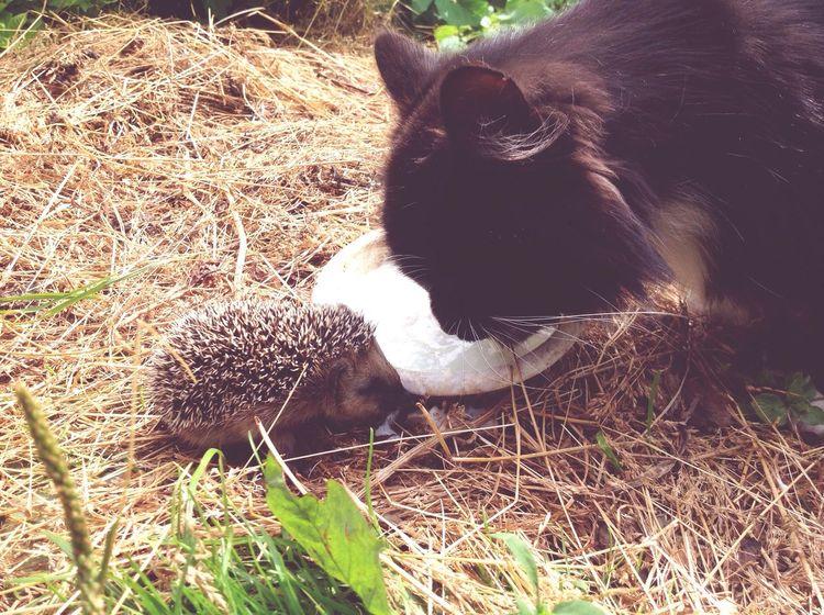 Cat Animal Themes Pets Animal Head  Animal Pease First Eyeem Photo