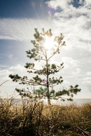 Sun shining over trees on field