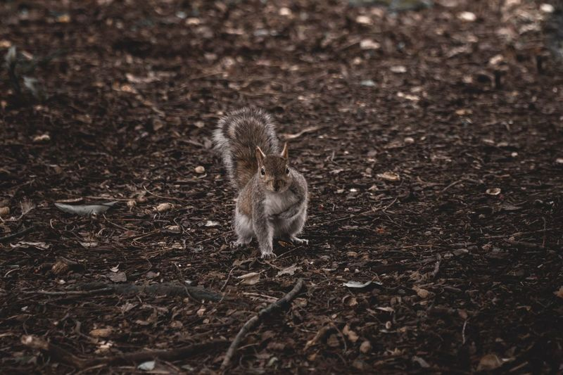 Park Spring Squirrel Adorable Wildlife & Nature Animal Themes Animal Animal Wildlife One Animal Animals In The Wild Land Field No People Nature Vertebrate Day Dirt High Angle View Young Animal Outdoors Mammal Looking At Camera