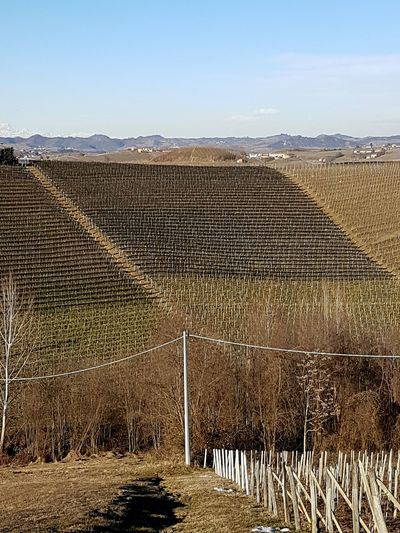 Agriculture Sky Nature Outdoors Growth No People Day Tranquility Blue Scenic View Clear Sky Langhe Piedmont Italy Vineyards In Winter Travel Destinations Winter Barolo Wineyards Landscape