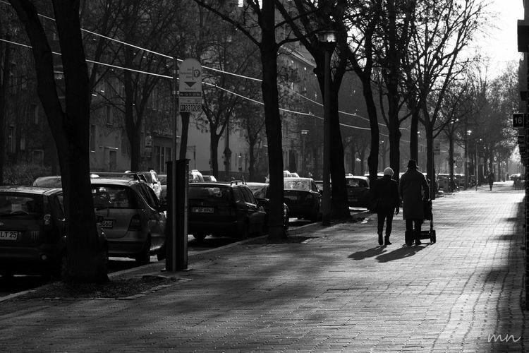 Bare Tree City City Life City Street Day Full Length Leisure Activity Lifestyles Road The Way Forward Tree Tree Trunk Walk This Way