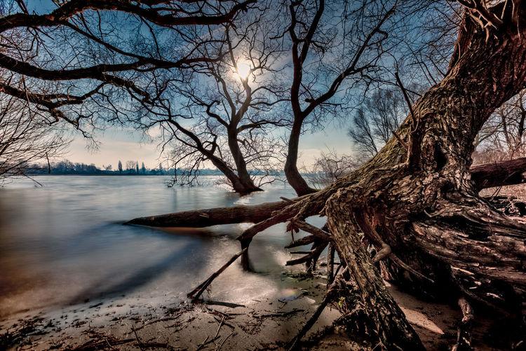 Bare trees on shore against sky