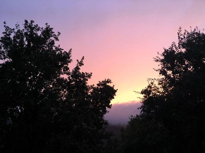 cielo rosa di sera bel tempo si spera Tramonto;sole;cielo Tramonto Alberi Cielo Rosa Rosa Cielo Cielo E Nuvole First Eyeem Photo