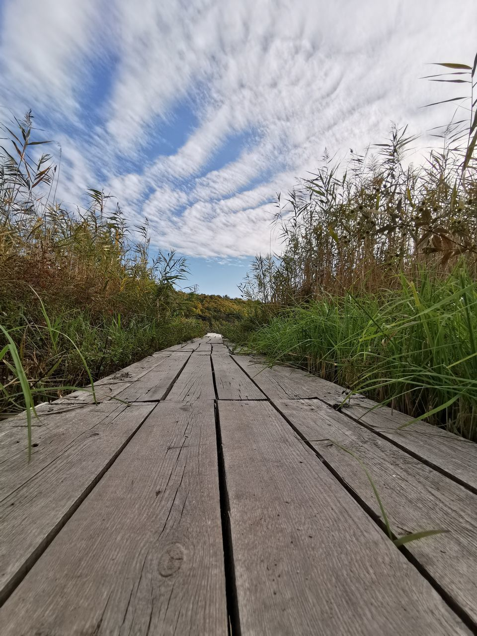 sky, plant, wood - material, nature, the way forward, grass, direction, cloud - sky, no people, day, transportation, diminishing perspective, boardwalk, footpath, tree, tranquility, land, outdoors, vanishing point, landscape, wood, surface level, long