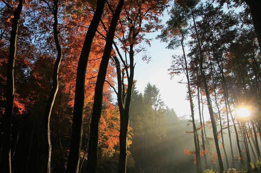 Perfect MatchShowcase: November Showcase:NovemberLeading Lines Glitch Autumn Autumn🍁🍁🍁 Autumn Colors Nature_collection Nature On Your Doorstep Nature Photography Naturephotography Bruchmühlbach-Miesau My Best Photo 2015 No People Colors Of Autumn Creative Light And Shadow Showcase : November Shadows & Lights Autumn 2015 Autumnbeauty Twillight Tree_collection Trees And Sky Learn & Shoot: After Dark Pastel Power
