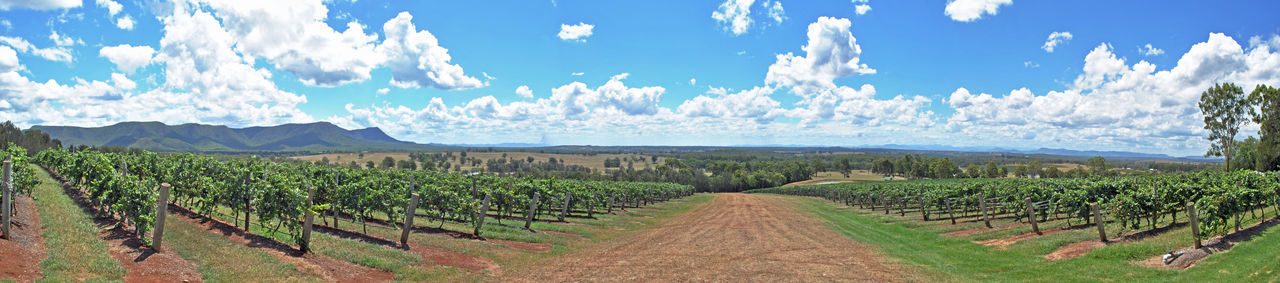 Panoramic view of vineyard against sky