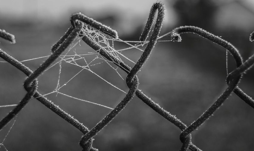Focus On Foreground No People Close-up Spider Web Day Nature Fragility Outdoors Web Open Edit By Ivan Maximov From My Point Of View Atmospheric Mood Black & White Monochrome Monochrome Photography Frosty First Frost Black Mood Atmosphere Complexity