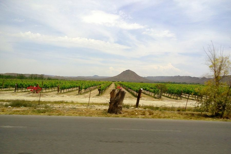 Trip to Parras Coahuila where Casa Madero wine is made.Agriculture Nature Parrasdelafuente Parras Green Color No People No Filter Mexico Coahuila Sky Mountain Mountain Range Grapefruit Grapevine Neighborhood Map Let's Go. Together. Lost In The Landscape