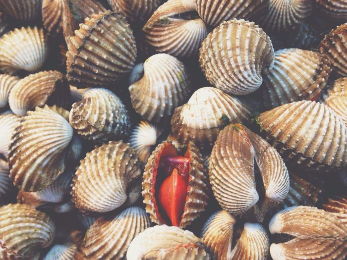 |• Smile •| ... 🌱 Seafood Food Clam Backgrounds Healthy Eating Food And Drink No People Large Group Of Objects Close-up Freshness Indoors  Nature Day Vscocam