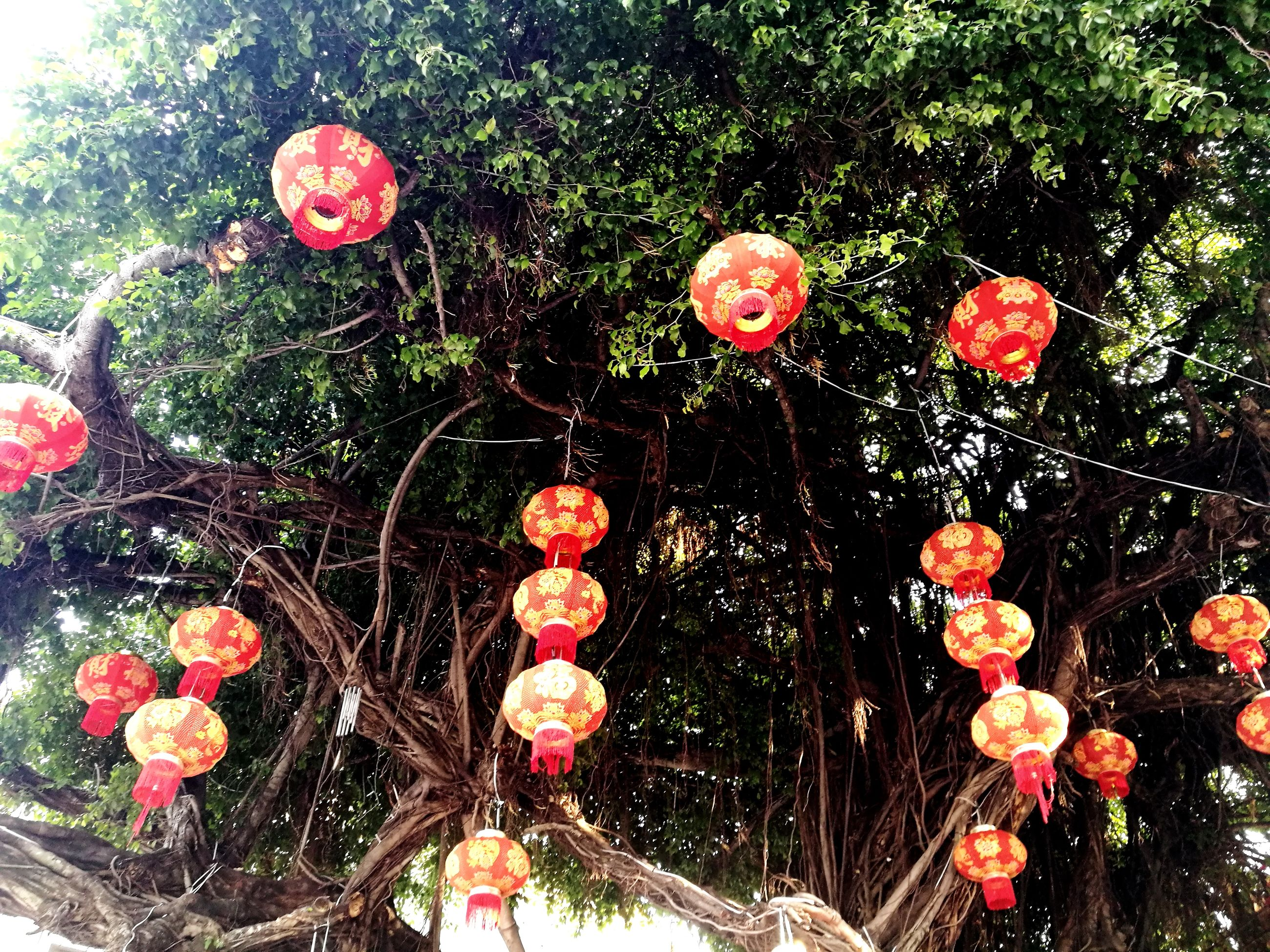 growth, tree, no people, outdoors, day, celebration, low angle view, hanging, nature, flower, close-up, beauty in nature, fragility, freshness