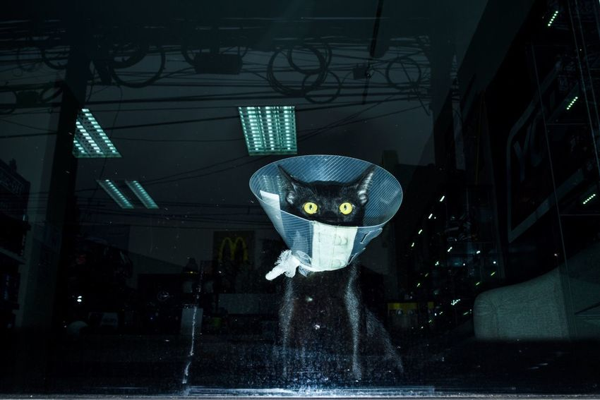 The Innovator Cat Cat♡ Catoftheday Photooftheday Streetphotography Street Photography EyeEm Best Shots The OO Mission