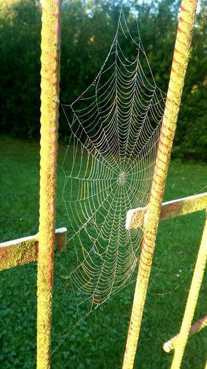 Spiderweb Rainbow Colors Morning Light