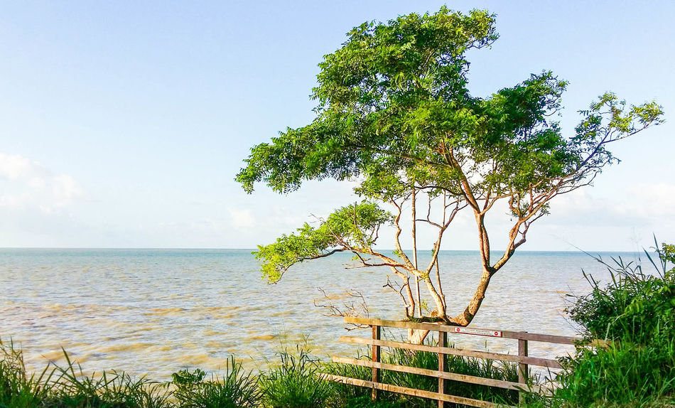 Afternoon Blue Blue Sky BossplayaPictures© Dreamland Enjoying Life French Guiana Goodtime Guyane Francaise Journey Landscape Oklm Outdoors Overseas Posey Reflection Sea Seafront Sky Sun Tranquil Scene Trees Trees And Sky Treescollection Water