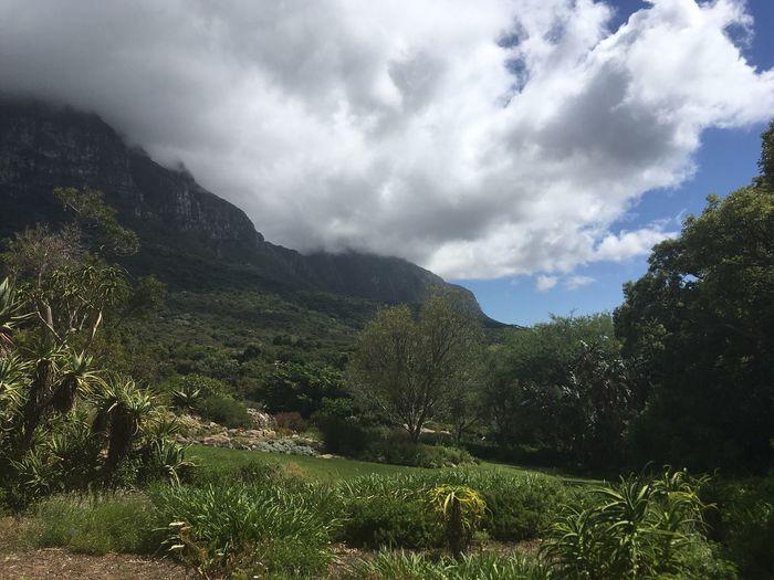 Amazing View from Kirstenbosch Gardens