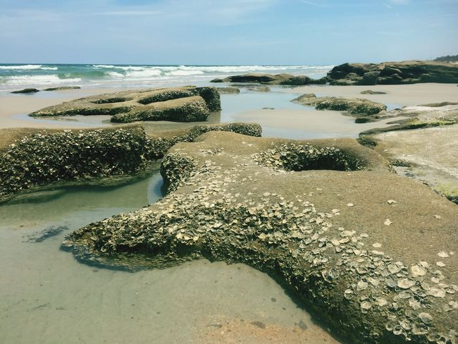 Taken in Marineland, Florida Sunshine ☀ Beaches Of The World Florida Life First Eyeem Photo