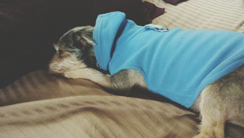 My Puppy Is Cold Cold Days cosmo