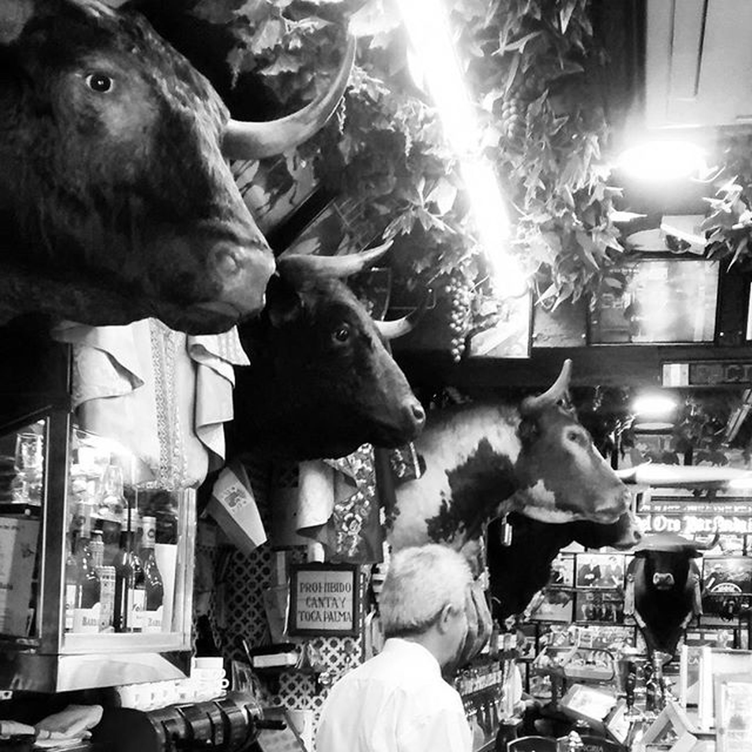 animal themes, domestic animals, mammal, indoors, pets, one animal, men, dog, incidental people, lifestyles, livestock, two animals, togetherness, night, leisure activity, standing, illuminated, portrait