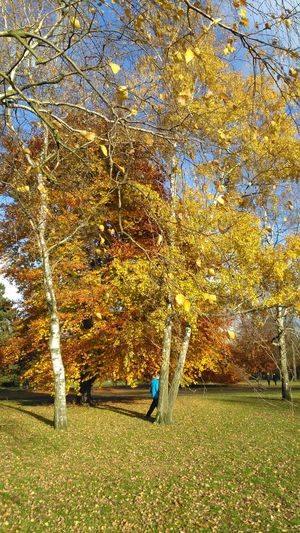 Berlin Park Colours Contrast Sun Blue Sky Yellow Leaves Real People Field Nature Outdoors One Person Men Beauty In Nature Growth Day Working Tree Grass Only Men People