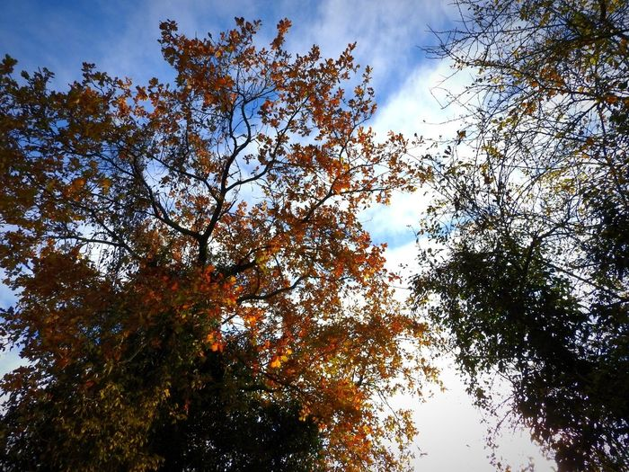 EyeEmNewHere Autumn🍁🍁🍁 Automne🍁🍂🍃 Nature Photography EyeEm Nature Lover Arbre En Automne Beauty In Nature Nature Naturepower Branches Of Trees Beautiful Art Rouge Orange Color