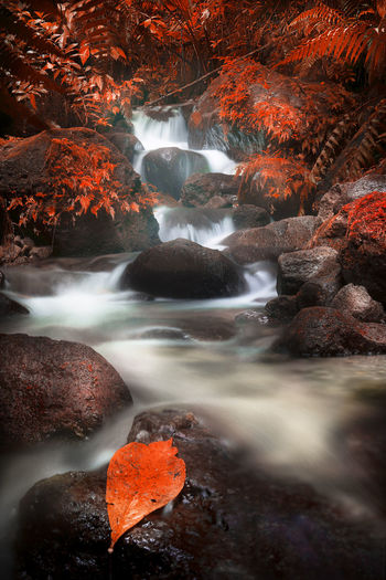 Domaine d'émeraude, Martinique Automne🍁🍂🍃 Autumn Beauty In Nature Cascade Foret Japan Landscape Nature Night No People Outdoors Riviere Scenics Travel Destinations Water Waterfall